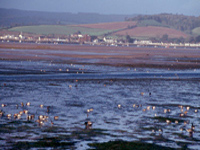 EXMOUTH NATURE RESERVE, Exe Estuary, South Devon